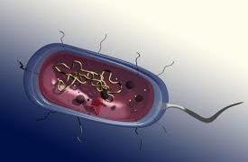 Il batterio che digerisce la plastica