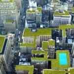 Tetti verdi e giardini verticali, idee green per valorizzare gli edifici