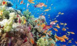 Strategia marina, importante proseguire e sviluppare il lavoro del Snpa