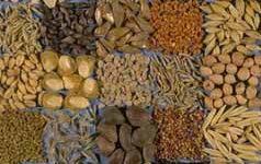La problematica delle micotossine nella filiera agro-alimentare