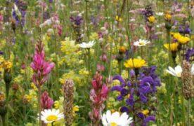 Piano nazionale di monitoraggio della biodiversità