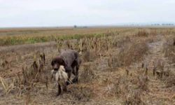 Limitazioni all'attività venatoria a causa della siccità e degli incendi che hanno colpito il Paese