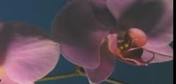 L'intelligenza silenziosa e sconosciuta delle piante