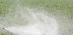 Fiori nei campi anziché pesticidi